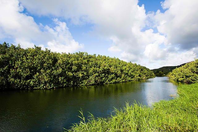 Hanalei River - Hawaii