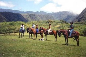 Maui Stables