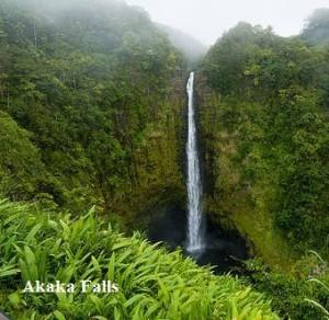 Akaka Falls State Park - Akaka Falls
