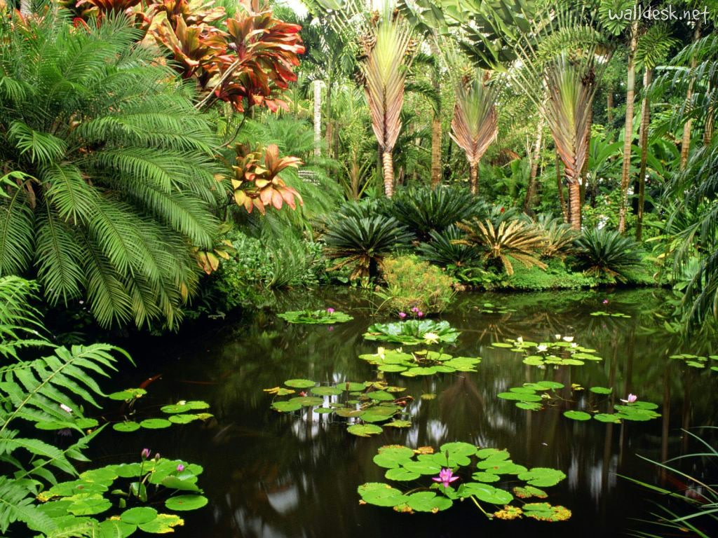 fotos jardins tropicais:Hawaii Tropical Botanical Garden – Home to the world's largest