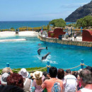 Sea Life Park - Hawaii