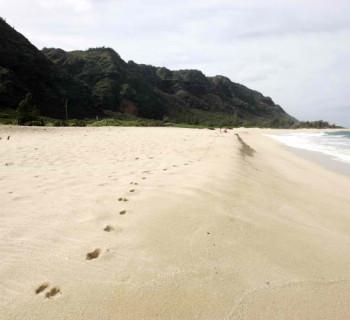 Mokuleia's Army Beach in Oahu, Hawaii