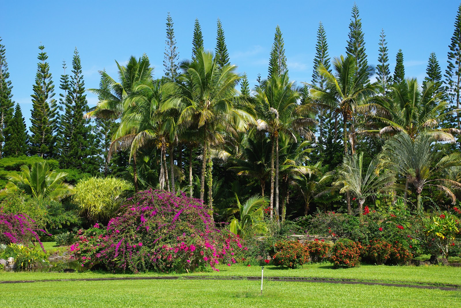 Nani mau gardens a 39 forever beautiful garden in hilo hawaii only in hawaii for Garden images