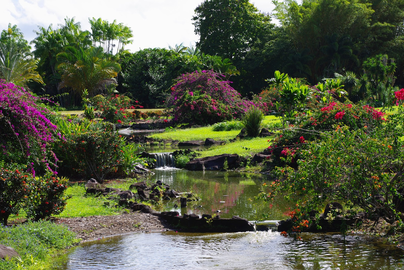 Nani mau gardens a forever beautiful garden in hilo for Hilo botanical gardens