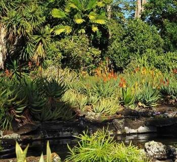 Moir Gardens - Poipu, Kauai, Hawaii