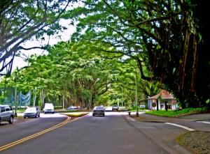 Reeds Bay Beach Park - Banyan Drive, Hilo, Hawaii