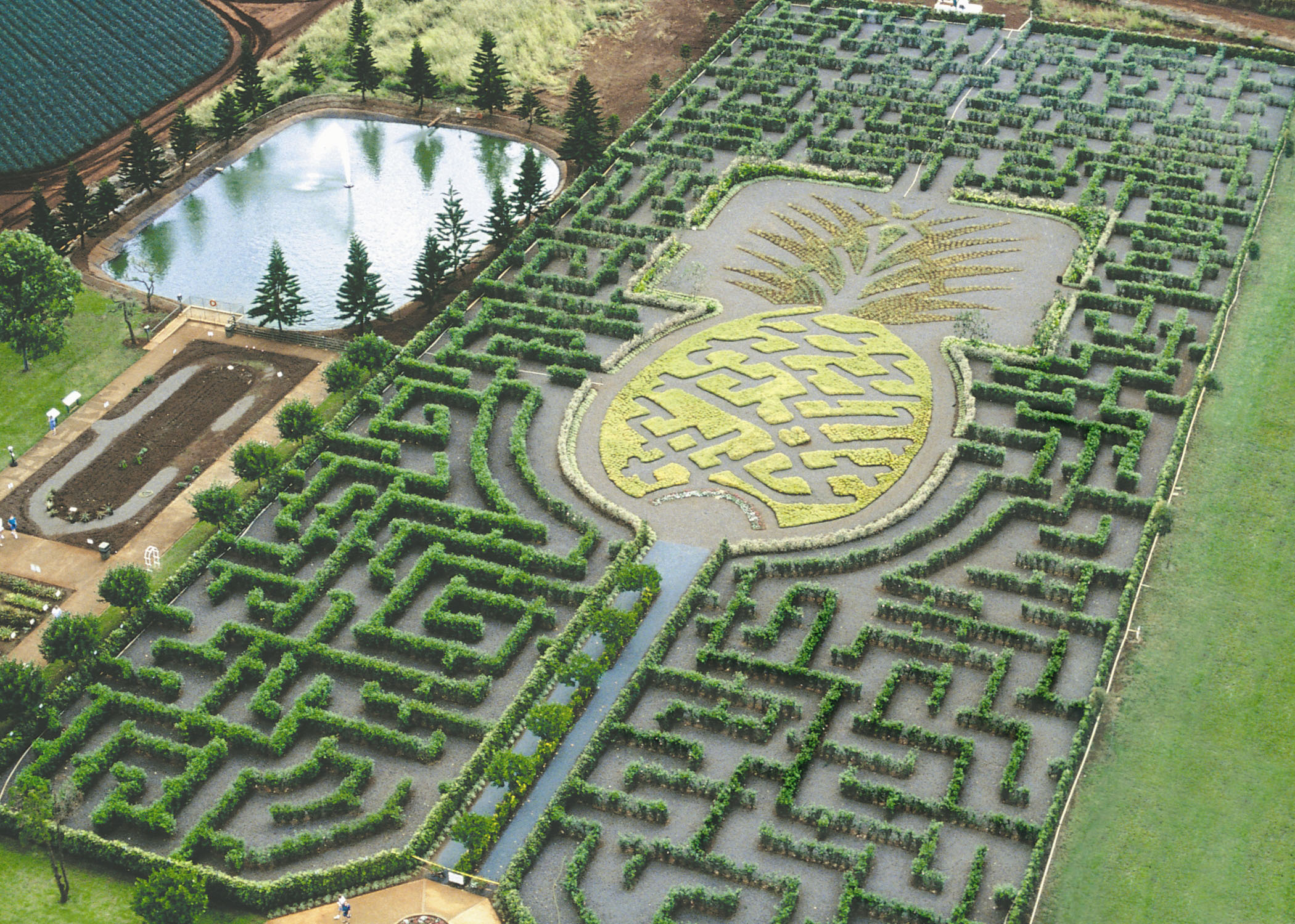 Image result for dole plantation