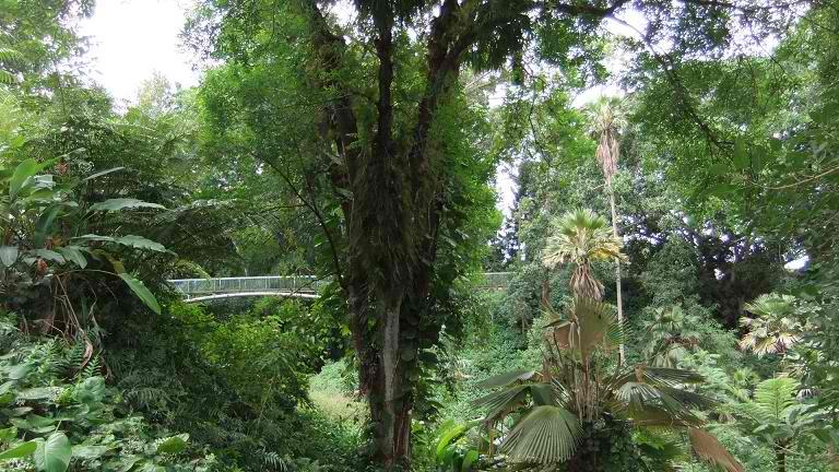 Wahiawa Botanical Garden - Oahu, Hawaii