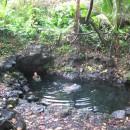 Issac Hale Beach Park - Pohoiki Hot Springs