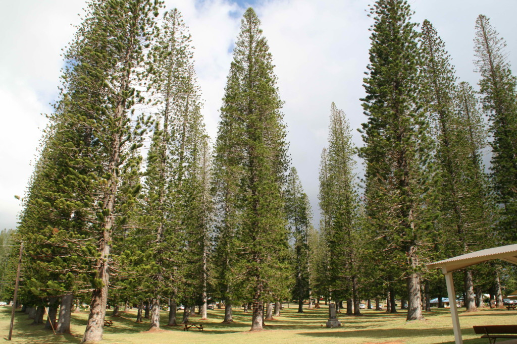 Dole Park - Lanai, Hawaii