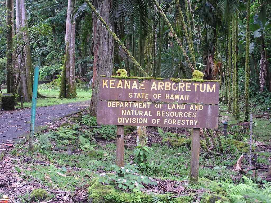 Ke'anae Arboretum - Hana Highway, Maui, Hawaii