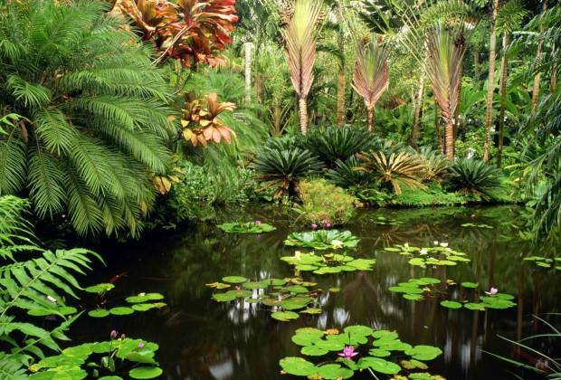 Hawaii Tropical Botanical Gardens - Big Island Hawaii