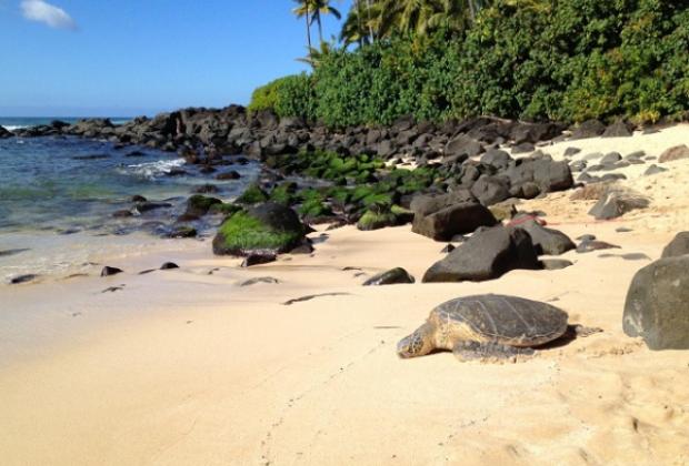 Laniakea Beach - Oahu, Hawaii