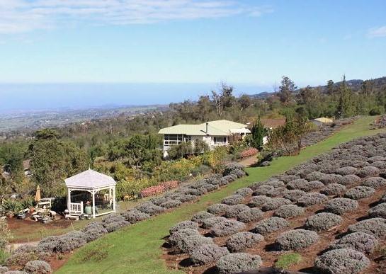 Ali'i Kula Lavender Farm - Maui, Hawaii