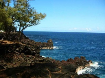 MacKenzie State Recreation Area - Big Island, Hawaii