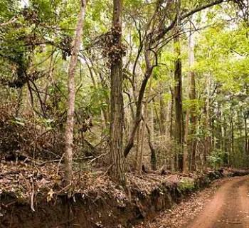 Munro Trail - Lanai, Hawaii