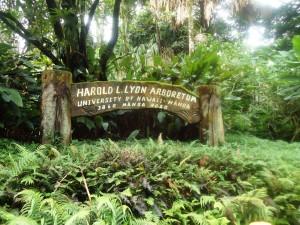 Lyon Arboretum - Honolulu, Hawaii