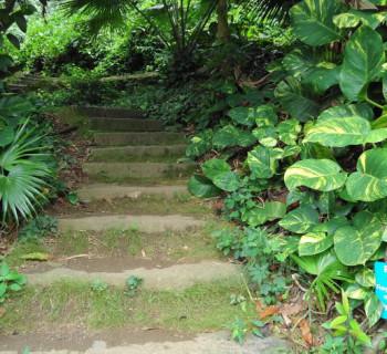 Friendship Garden - Kaneohe, Oahu