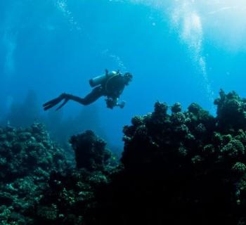 Dragon Reef - Maui, Hawaii