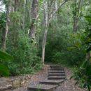 Waikamoi Nature Trail - Maui, Hawaii
