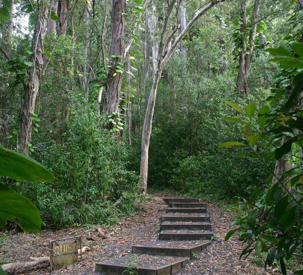Waikamoi Nature Trail - Maui, Hawaii