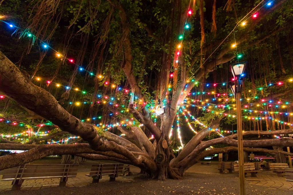 Lahaina Banyan Tree & Christmas in Hawaii | Only In Hawaii