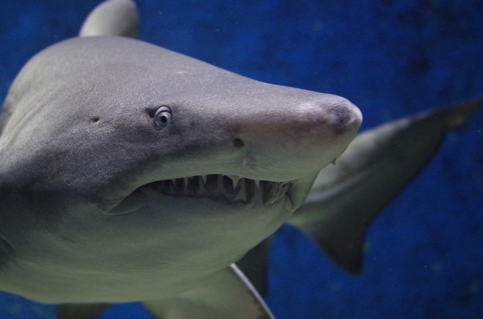 Bizaare Laws in Hawaii - Shark
