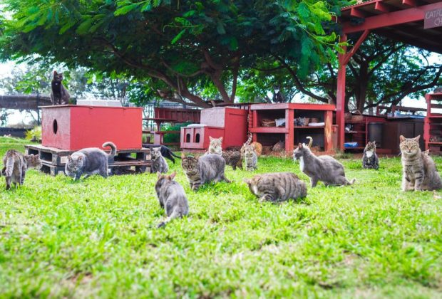 Lanai Cat Sanctuary - Hawaii