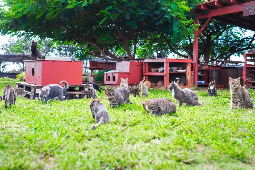 Lanai Cat Sanctuary - Hawaii